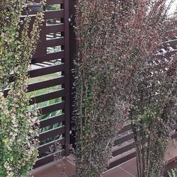 ogrodzenie posesji przęsła